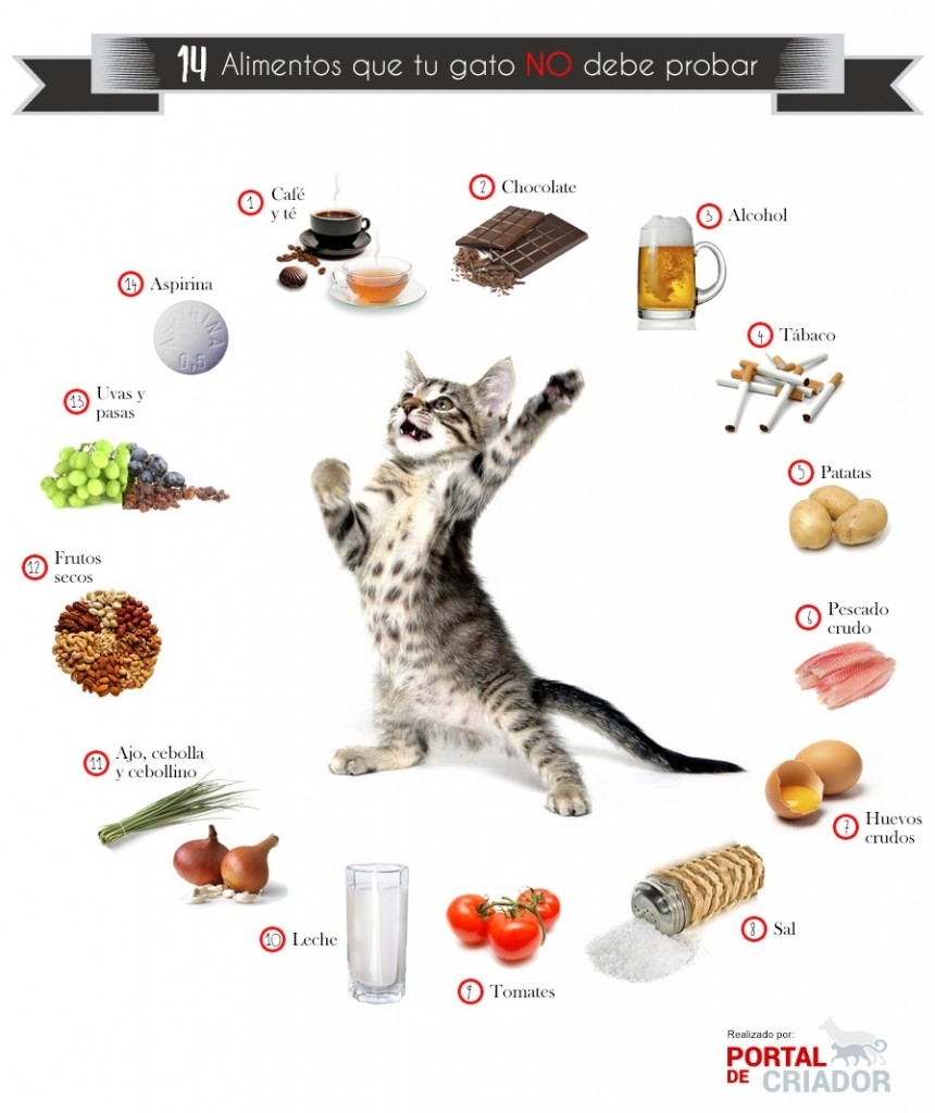 infografia gatos-fb