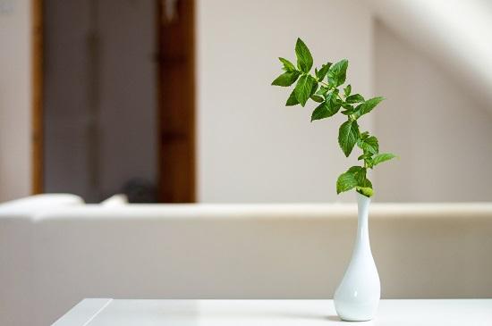Detalle vegetal